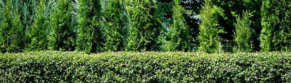 Care Program | Tree and Shrub Expert Service